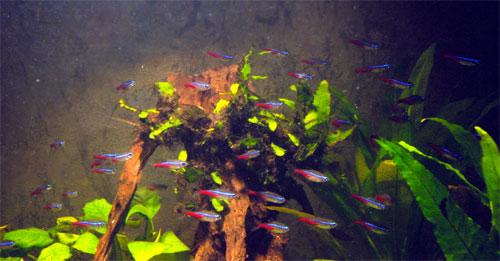 nourriture vivante aquarium